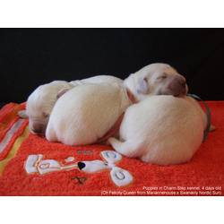 from Charm Step kennel